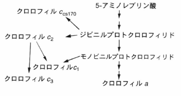 chl c biosynthesis.png