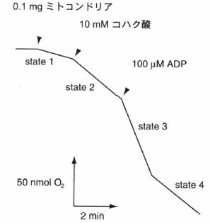 respiratory control ratio.png