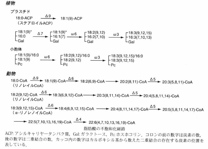 fatty acid desaturation.png