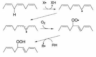 oxidation of lipid.png