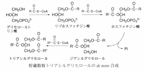 biosynthesis of storage lipid-1.png