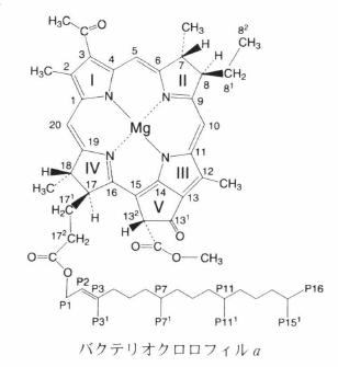 bacteriochlorophyll a.png