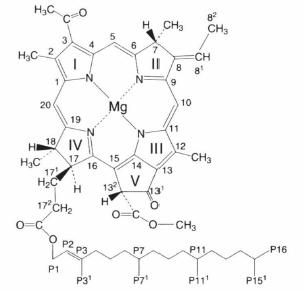 bacteriochlorophyll b.png