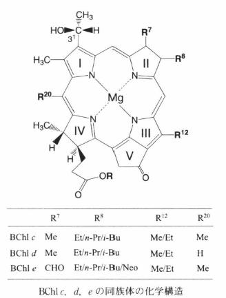 bacteriochlorophyll e-1.png