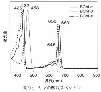 bacteriochlorophyll e-2.png