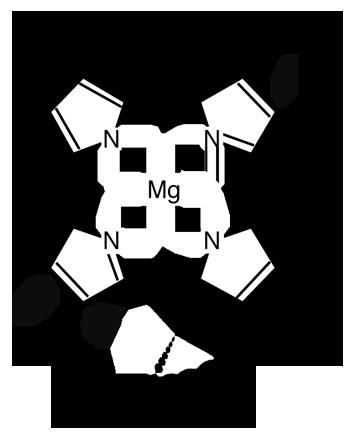 Protochlorophyllide.png