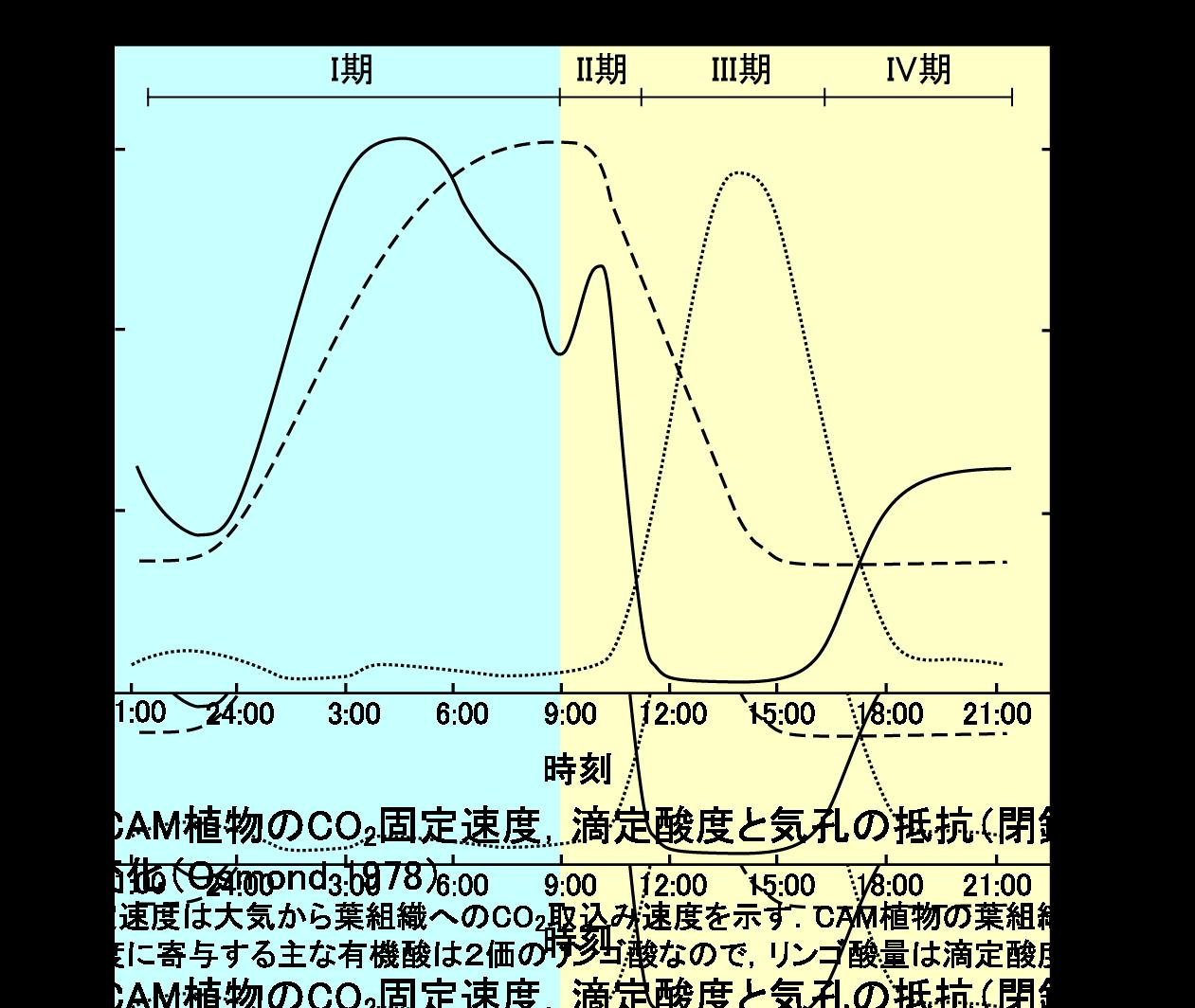 4phases-cs3-v5b.png