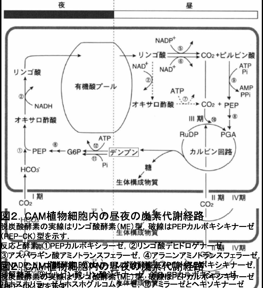 CAM path (Ph 1-4).png