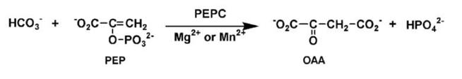 PEPC反応2.png