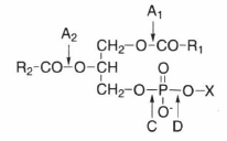 phospholipase.png