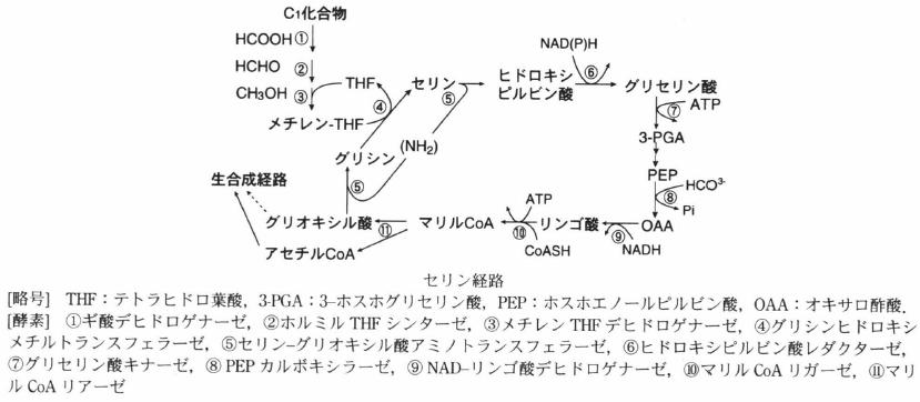 methylotroph.png
