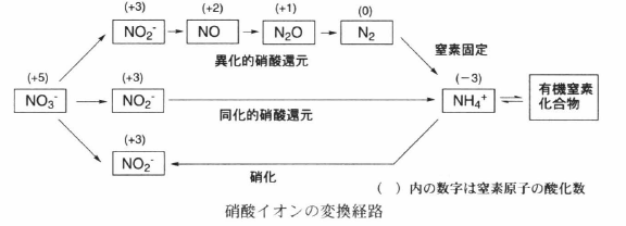 nitrogen cycle.png