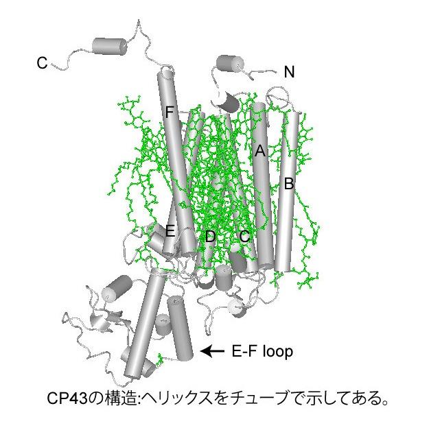 CP43.jpg